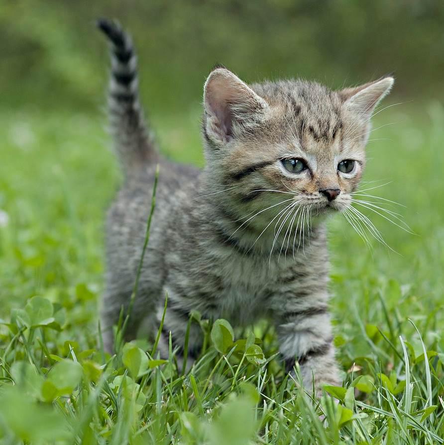 Die Entstehung Katzen Ein Neuntes Leben Katzen